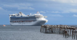 Imagen de un crucero en aguas chilenas donde se puede admirar un muelle con aves en sus orillas y un despejado cielo azul.