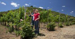 Imagen de dos turistas recorriendo las viñas de Chile