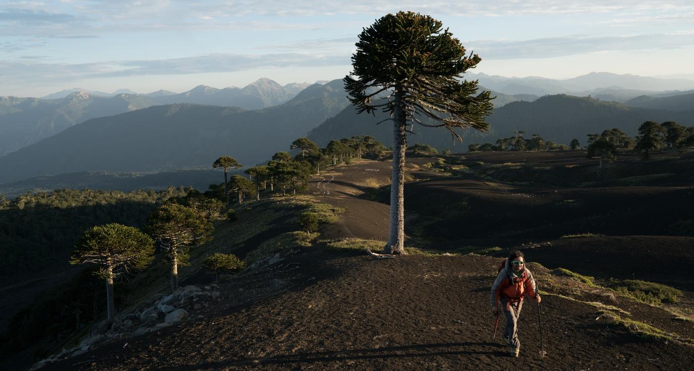Imagen de un hombre realizando trekking en las alturas de Sollipulli