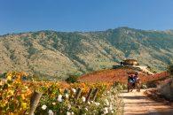 Imagen del Valle de Colchagua y sus fructiferas plantaciones
