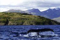 Foto parque marino ballena y naturaleza