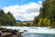fotografía de paisaje entre río y bosque verde